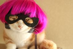 cosplay,cat,munchikin,kiku,cap,Hit-Girl,Kick-Ass