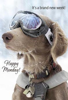 It's a new week! Happy Monday! ♥