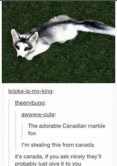 """Adorable Animal Memes For The Squee-ers - Funny memes that """"GET IT"""" and want you to too. Get the latest funniest memes and keep up what is going on in the meme-o-sphere. Cute Funny Animals, Cute Baby Animals, Funny Cute, The Funny, Hilarious Sayings, Funny Sms, Funny Drunk, Drunk Humor, 9gag Funny"""