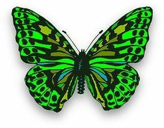 Free butterfly clipart, animations and gifs. Animated butterflies and butterfly clipart images. Butterfly Clip Art, Butterfly Pictures, Green Butterfly, Butterfly Painting, Butterfly Wallpaper, Butterfly Design, Butterfly Wings, Rainbow Butterfly, Beautiful Bugs