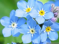 undefined Blue Flowers Images Wallpapers (36 Wallpapers)   Adorable Wallpapers