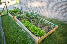 Raised Beds with corrugated steel and wood frames