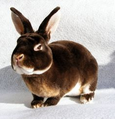"""All About Mini Rex Rabbits 