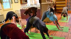Farm spices up yoga class with a bunch of baby goats