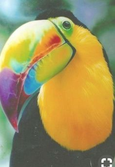 ideas for tropical bird wallpaper parrots Pretty Birds, Love Birds, Beautiful Birds, Animals Beautiful, Cute Animals, Beautiful Pictures, Tropical Birds, Exotic Birds, Colorful Birds