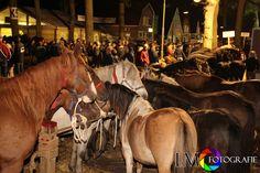 Zuidlaarder paardenmarkt 2013
