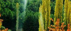 """""""Tutunacak bir dalı kalmayan toprağa dönmeyi arzular; unuttuğu kendisinin bir ağaç olduğudur…"""""""