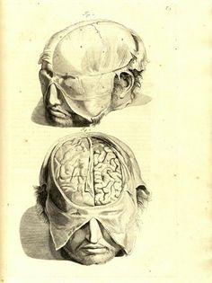 Items similar to Print Of Vintage Brains Cranium Head Anatomy Weird Strange Bizarre Odd Halloween Prop on Etsy Anatomy Body Parts, Head Anatomy, Brain Anatomy, Anatomy Drawing, Male Figure Drawing, Figure Drawing Reference, Anatomy Reference, Brain Drawing, Drawing Prompt