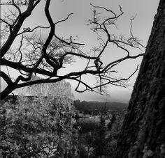 Blick auf den Bergpark, aufgenommen im Park Schönfeld #bergpark #herkules #kassel #parkschönfeld #blackandwhite #schwarzweiss #tree #winter (eul)