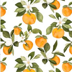 Oranges Fabric - Orange Blossom On Pink By Mintpeony - Summer Fruit Kitchen Decor Citrus Cotton Fabric By The Yard With Spoonflower Fruit Kitchen Decor, Orange Kitchen Decor, Orange Pattern, Fruit Pattern, Orange Tapete, Orange Wallpaper, Fruit Illustration, Botanical Illustration, Orange Fabric