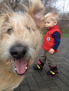 Photobombing Walter the Shepadoodle pinned by myoodle.com
