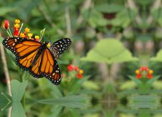 Papiliorama : Papiliorama Foundation, Kerzers, Switzerland, butterflies, tropical forests, Nocturama Butterfly Park, Tropical Forest, Switzerland, Butterflies, Foundation, Birthday, Places, Birthdays, Papillons
