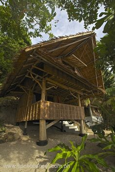 Kookoo's Nest — Cott