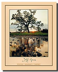 Your home will look amazingly attractive with this wonderful oak pine tree at sunrise scenery poster. It depicts the image of a thick oak pine tree with a beautiful sunrise near the lake is sure to attract lot of attention. This beautiful wall art will help to add a sense of joy and an infusion of nature's tranquility to any room in your home. It will give a warm welcome to those who enter in your home if hanged in your living room.