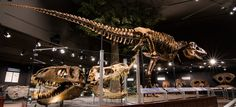 Siebel Dinosaur Complex | Museum of the Rockies