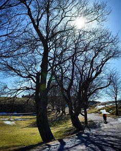 Dancing trees in Suomenlinna Helsinki. Helsinki, Dancing, Anna, Country Roads, Trees, Plants, Instagram, Dance, Tree Structure