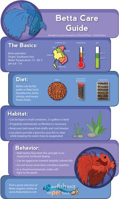 Betta Care Guide (infographic) | thatpetplace.com #fish #aquarium #freshwater #betta #infographic