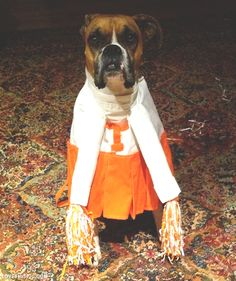 I am NOT a fan of dressing pets... however, this made me think of my friend Linda... so I had to pin it... To my friend... a true VFL