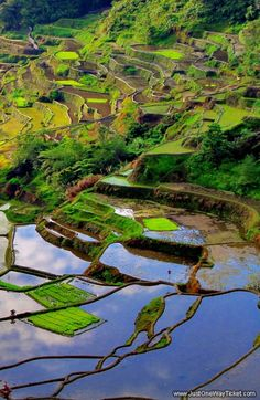 One of 10 Reasons why you should visit the Philippines: The rice terraces of Banaue. © Sabrina Iovino @Just1WayTicket