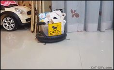 CAT GIF • Funny & cool Cat riding roomba hoover like a Boss. They see me rollin'.... they hatin'