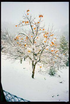 Winterimpression aus den Marken, der Heimat von Giuseppe Chiucchiù