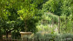 French garden in the beautiful Dordogne