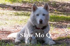 Throwback Thursday video time - having fun with speed difference between Typhoon and Qannik! #video #dogs