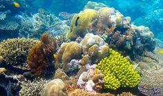 الأمم المتحدة تحذر من تدهور الشعاب المرجانية…: حذر برنامج الأمم المتحدة للبيئة من النتائج الناجمة عن استمرار الاتجاهات الحالية لتغير المناخ…