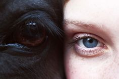 understand the animal eye in yourself and others