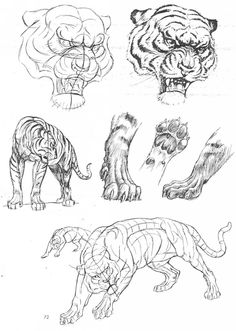 Animal blueprint model sheet pinteres art of animal drawing malvernweather Image collections