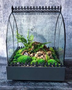Terrarium with moss and ferns by Doodle Bird Terrariums Closed Terrarium Plants, Succulent Terrarium, Succulent Ideas, Bottle Garden, Glass Garden, Indoor Mini Garden, Indoor Gardening, Gardening Tips, Plant In Glass