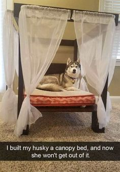 The Best Funny Pictures Of Today's Internet  RuinMyWeek.com #funny #photos #pics #pictures #humor #comedy #hilarious #cute #dog #dogs