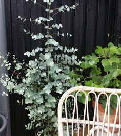 Eukalyptus Outdoor Structures, Instagram, Gardens