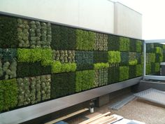 A lovely wall Wall Panel Design, Hanging Plants, Hanging Gardens, Boundary Walls, Succulent Wall, Good Neighbor, Rooftop Garden, Design Competitions, Succulents Garden