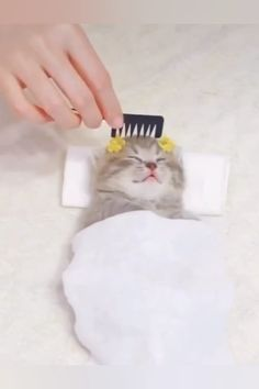 Funny Animal Videos, Cute Funny Animals, Funny Animal Pictures, Cute Baby Animals, Animals And Pets, Kittens Cutest, Cats And Kittens, Animals Images, I Love Cats