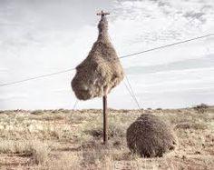 bizarre birds nest - Google Search