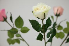 Rosa branca/verde   A Loja do Gato Preto   #alojadogatopreto   #shoponline