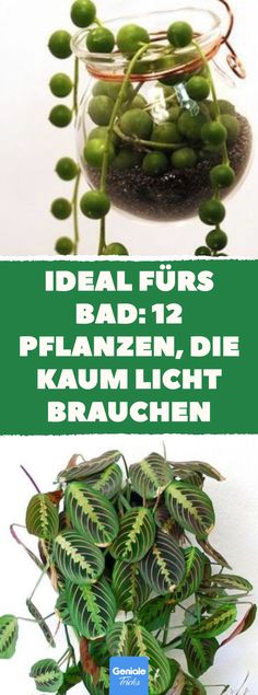 Ideal for the bathroom: 12 plants that hardly need any light- Ideal fürs Bad: 12 Pflanzen, die kaum Licht brauchen Ideal for the bathroom: 12 plants that hardly need any light. Garden Care, Decoration Plante, Plantar, Green Plants, Amazing Gardens, Home Deco, Vegetable Garden, Indoor Plants, Gardening Tips