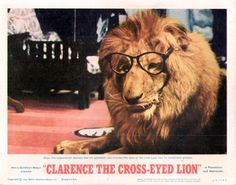 Leo the Cross Eyed Lion | How it all began: Clarence the Cross-Eyed Lion | Daktari TV Show