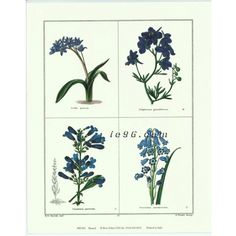 """Art Print By Benjamin Maund Rose Selavy Printed in Italy MD001 Size (8"""" x 10"""") -- $0.50"""