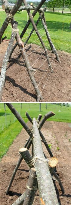 Pea Trellis Fort How to build a trellis for growing peas DIY Pea Trellis Ideas Projects Container Gardening, Diy Garden Trellis, Arch Trellis, Diy Garden, Growing Peas, Bamboo Trellis, Garden Planters, Veggie Garden, Container Gardening Vegetables