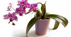 Cuida tus orquídeas de la mejor forma gracias a los consejos de MegaNicho.