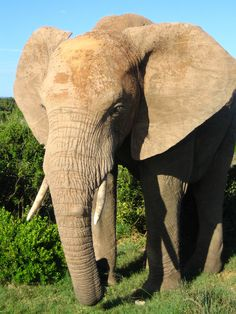 Minimising the Illegal Killing of Elephants and other Endangered ...