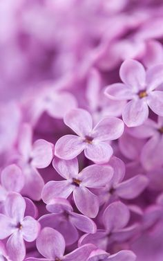 You can specify any bloom which you like and enjoy its look. Floating flowers will perfectly decorate the screen of your phone. Screen Wallpaper, Flower Wallpaper, Iphone Wallpaper, Lilac Background, Live Picture, Floating Flowers, Lilac Flowers, Background Pictures, Background For Photography
