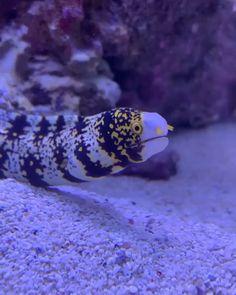 Best Saltwater Fish for 75 Gallon Tank 🐠 The Pet Supply Guy Beautiful Sea Creatures, Deep Sea Creatures, Animals Beautiful, Saltwater Aquarium Fish, Saltwater Tank, Animals And Pets, Funny Animals, Cute Animals, Salt Water Fish