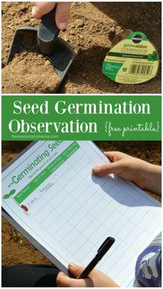 Free printable seed