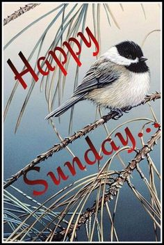 Image result for picmix sunday
