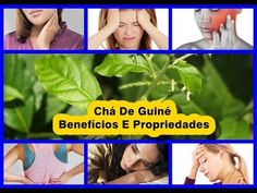 Chá De Guiné, Benefícios E PropriedadesTea Of Guinea, Benefits And Properties  Since human beings began to write their history on Earth Plants are part of their life being used for medicinal purposes. The ancients avoided many diseases or treated them quickly because they were aware of the beneficial effect that many plants could bring to the organism where each was known to combat certain diseases. It is crucial to know that certain plants can relieve symptoms of some disease that you are…