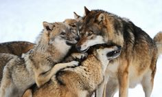 group hug!