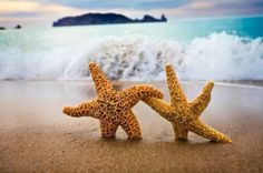Starfish in the Sand - Save the Date. Two starfish hold hands as they stroll along the beach on this save the date. I Love The Beach, Summer Of Love, My Love, Pink Summer, Summer Beach, Hello Summer, Summer Icon, Summer Swag, Happy Summer